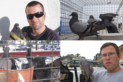 Pigeon Removal, Pigeon Control, Trapping Pigeons in Los Angeles
