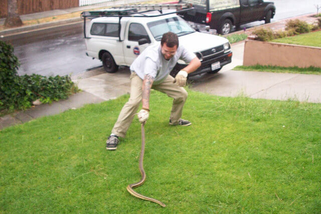 Riverside snake trapping and removal