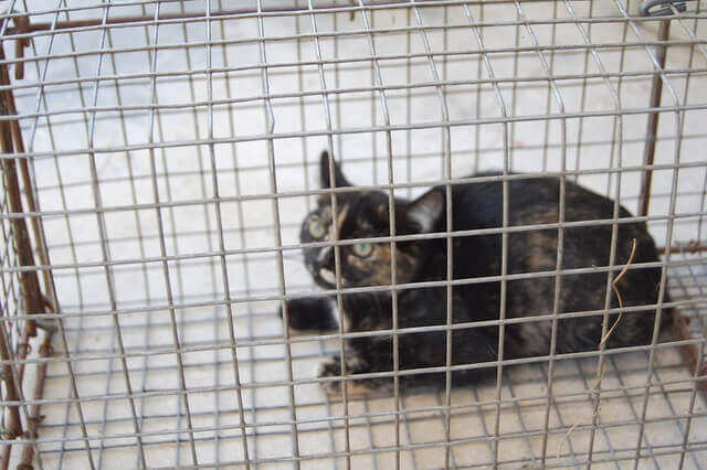 Feral cat removal in Los Angeles CA
