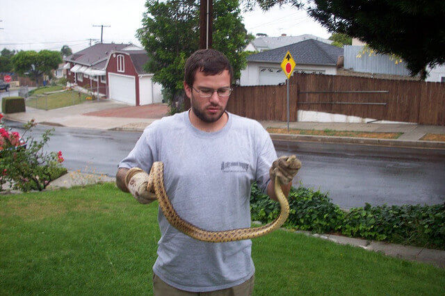 Snake trapping and removal in Fresno CA
