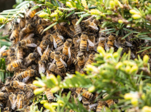 City of Los Angeles bee hive removal